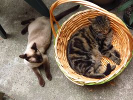 Pft, Basket Hogger! by Kitteh-Pawz