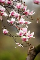 Spring Blossom by Art-Photo