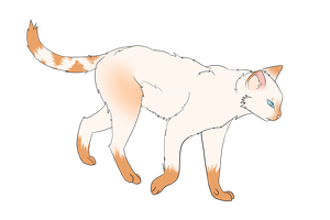 flame point Siamese doodle by xxSkyler