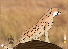 Cheetah by HappyDucklings