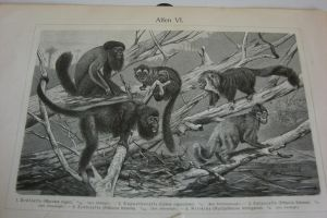 Lithograph FOR SALE or TRADE: monkeys 2 pt.2 by Lot1rthylacine