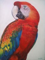 Red Parrot by Catherine1992