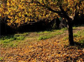 Leaving Leaves. by Julie-xxx