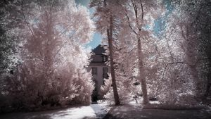 Borsig Villa Cotton Trees Berlin - infrared by MichiLauke