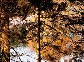 The Fall II by DundeePhotographics