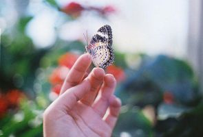 Butterfly by Hana17sisi