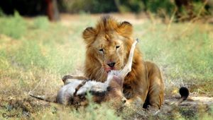 a king's meal by Yair-Leibovich