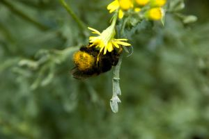 Humble Bumble IV by ravenmoonstone