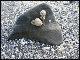 Barnacles and Snail by kessalia