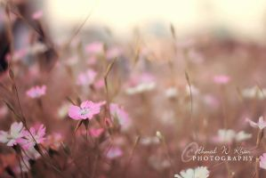 a bit of morning dream! by ahmedwkhan