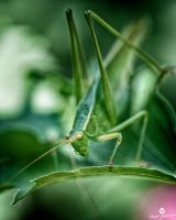 The Yellowed Eyed Bug HDR by mjohanson