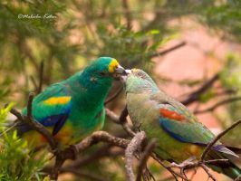 Lunch Time by FireflyPhotosAust