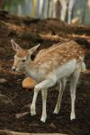 Deer Stock 37 by Malleni-Stock