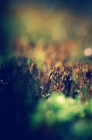 City of Moss by msteenphotographer