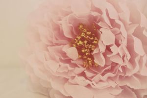 Flower by apparate