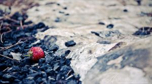 Wild strawberry by enemia