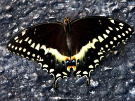 Close up of a Butterfly by gdsbngd2me