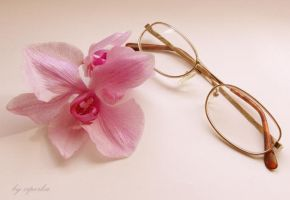 Pink flower and the glasses by ziperka