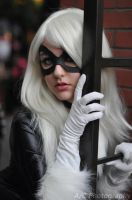 Black Cat by Adamantium84