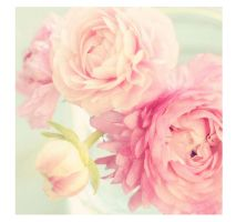 Peony by LilyOfTheVally