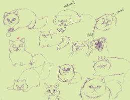 Persian Cats- expressions by fuzzypinkmonster