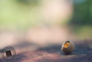 Broken Acorn - Using the Macro Lens Filter on 35mm by mariesturges