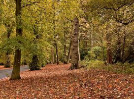 Autumnal Colours III by DundeePhotographics