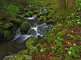 Porters Creek I by TRBPhotographyLLC