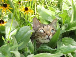 Garden Lovin' Cat by Kitteh-Pawz