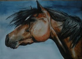watercolor horse by martak92