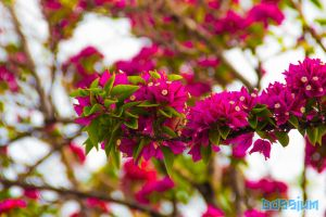 The Branch of Beauty by Dossium