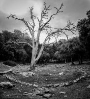 White tree in the forest by CabrerFoto