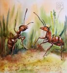 Big ants by stokrotas
