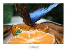 shutterflutter by benhewittcreative
