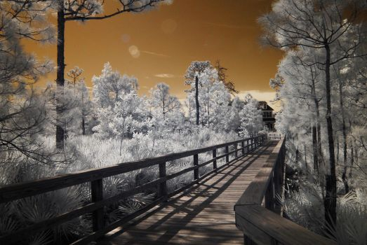 Infrared Photography by principemm