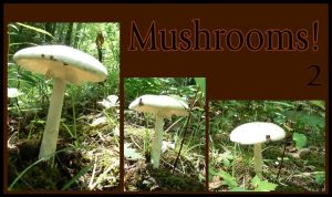 Mushrooms Pack 2 by remeyblue-stock