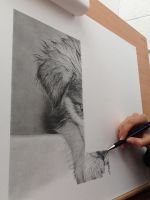 Stage drawing Husky pup by SamanthaMessias