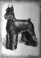 Giant Schnauzer Charcoal by DHTenshi