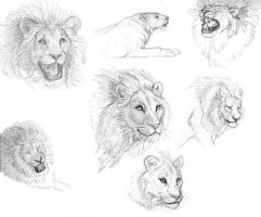 Lion Study 1 by Foxfeather248