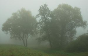 Trees by starykocur