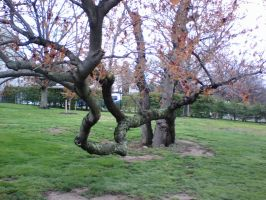 Twisted Tree by blackmariah27