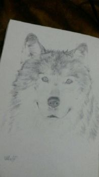 wolf drawing by awesomehero43