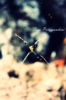 little spider by Sugipringgandani
