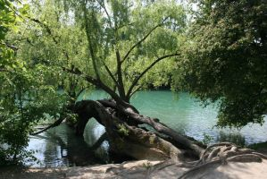 tree on river by NefletStock
