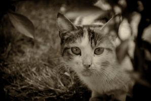 cat_6 by mufash