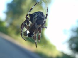 Spider #2 1 by Mihaela7