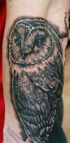 Barn Owl (Black and Grey) by seanspoison