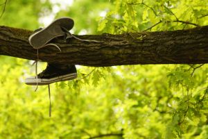 shoues in a tree by Jules-89