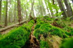 Moss_2 by kulfoniasty