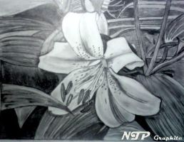 Oriental Lilly by Give1000Smiles